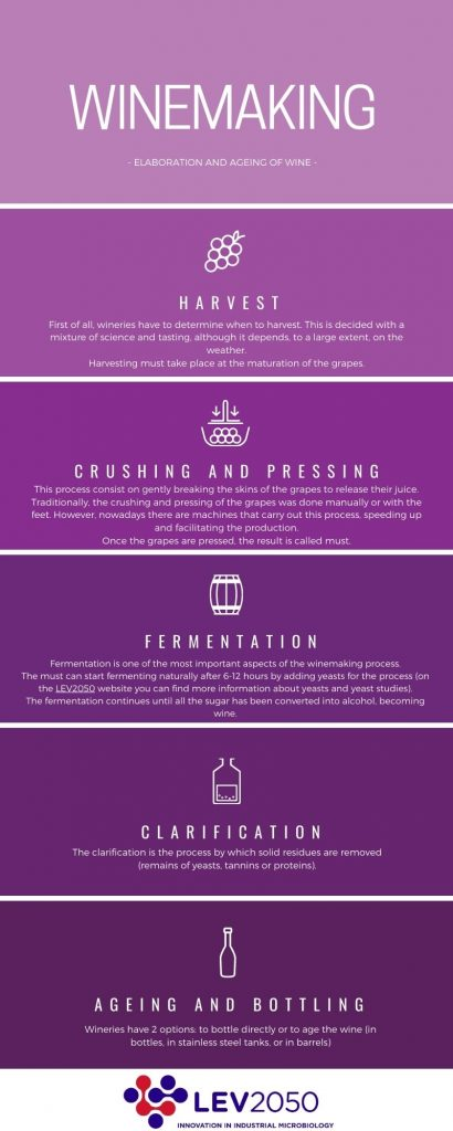Winemaking process infographic