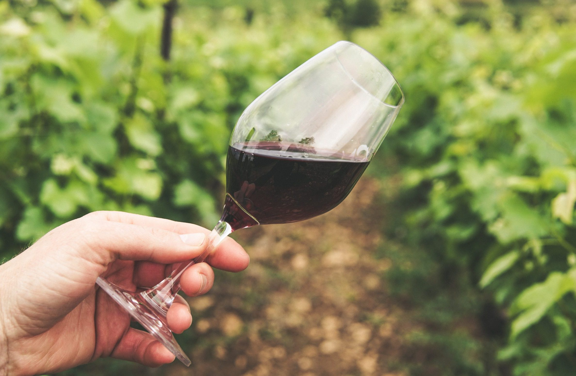 How is a wine tasting done? – Part 1
